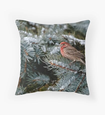 Male House Finch - Ottawa, Ontario Throw Pillow