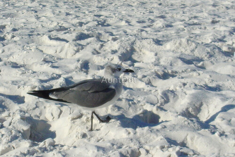 Seagull Strolling in the Sand  by AuntDot