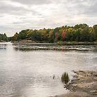 Burnished Silver Current - Mississagi River Autumn  by Georgia Mizuleva