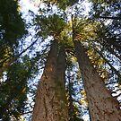Giants Reaching for the Sky by Chappy