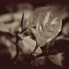 Leaf by Judi FitzPatrick