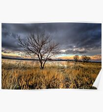 Winter Trees Sunset Poster