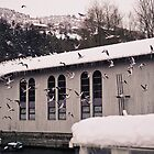 lake gulls at their feeding place (the Ohrid canal) by distracted
