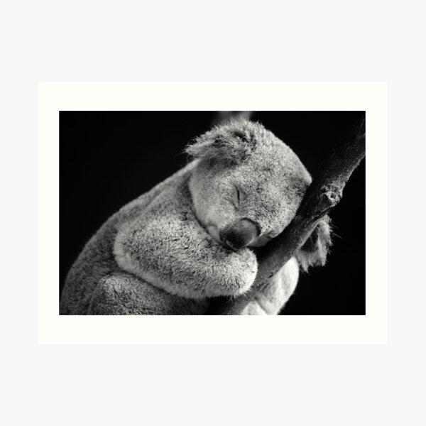 Wake Me Later - Sleeping Koala Art Print
