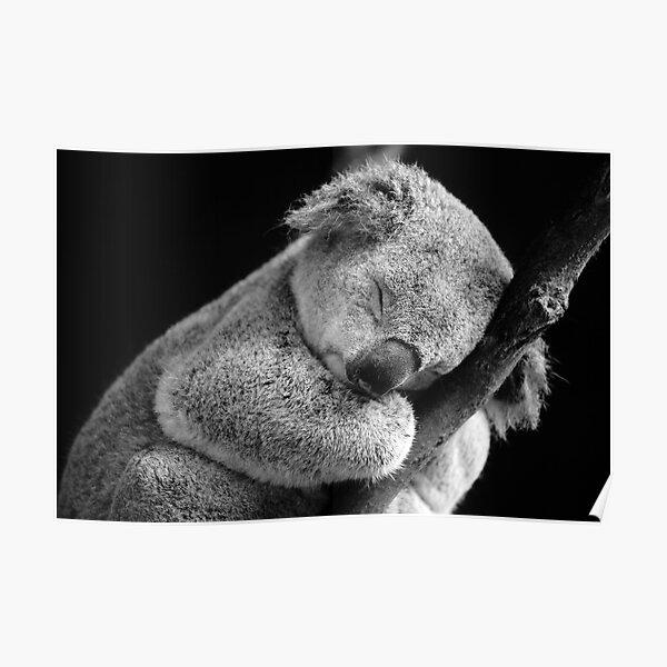 Wake Me Later - Sleeping Koala Poster