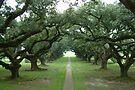 Oak Avenue by John Keates