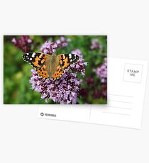 Painted Lady butterfly Postcards