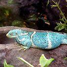 Iguana- Adelaide zoo by elizabethrose05