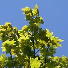 spring greens by Babz Runcie