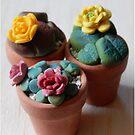 teeny tiny plants by Babz Runcie