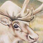 Caribou by WyoClements