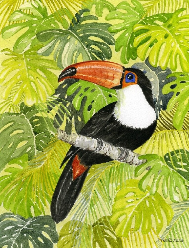 Toucan in Jungle by FranEvans