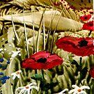 Poppy field by AnneK