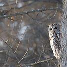 Peek-A-Hoot by DigitallyStill