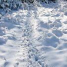 Deer Tracks by Ann Garrett