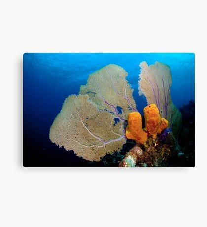 Yellow Sponge & Fan coral symmetry Canvas Print