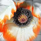 Whispering Softly................ by naturelover
