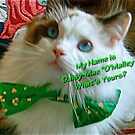 Happy St. Patrick's Day... by Carol Clifford