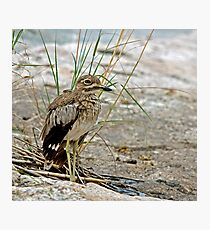 Water Thick-Knee Photographic Print