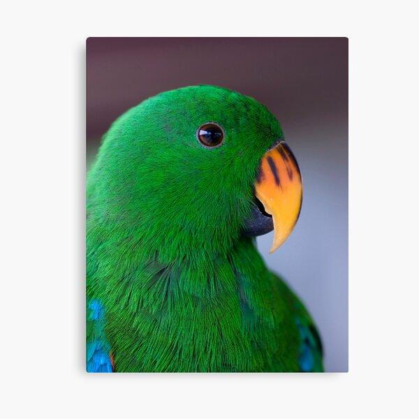 Zulu - eclectus parrot Canvas Print