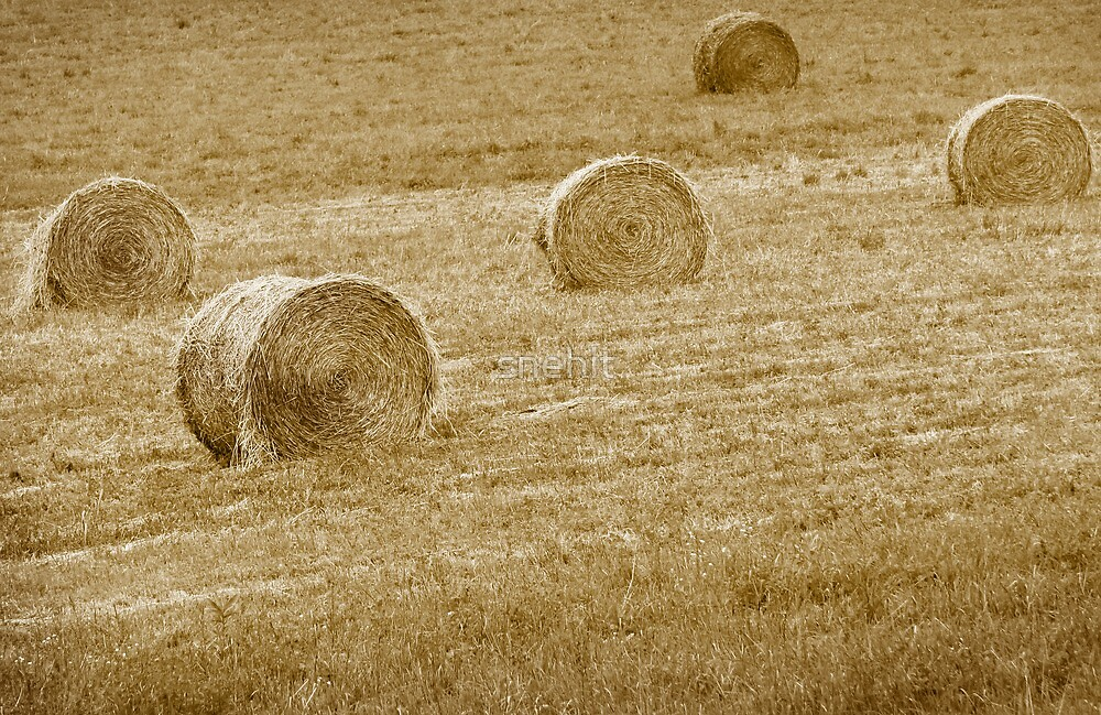 Wheat Bales by snehit