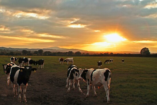 The Herd at Sunset by Martina Fagan