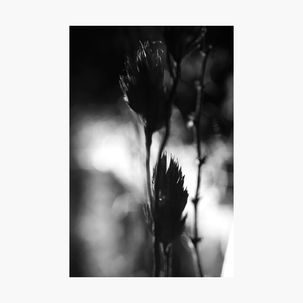 Nature #28 Photographic Print
