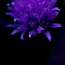 Purple-Blue by Marilyn Schmidlin