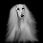 White Saluki No 12 by iMia69