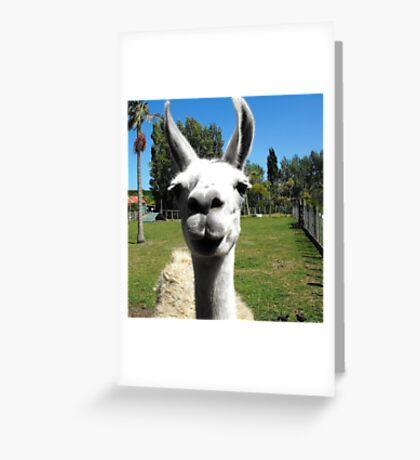 Hello Llama Greeting Card