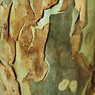 Bark beauty #1 by Virginia McGowan