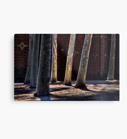 Urban Forest Metal Print