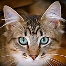 Manyana the Cat by lisajns