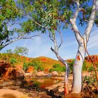 Ghost Gum Ormiston Gorge by Lexa Harpell