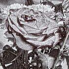 Silver Rose by sabelacarlos
