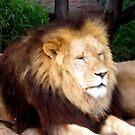 King Leo by garyt581
