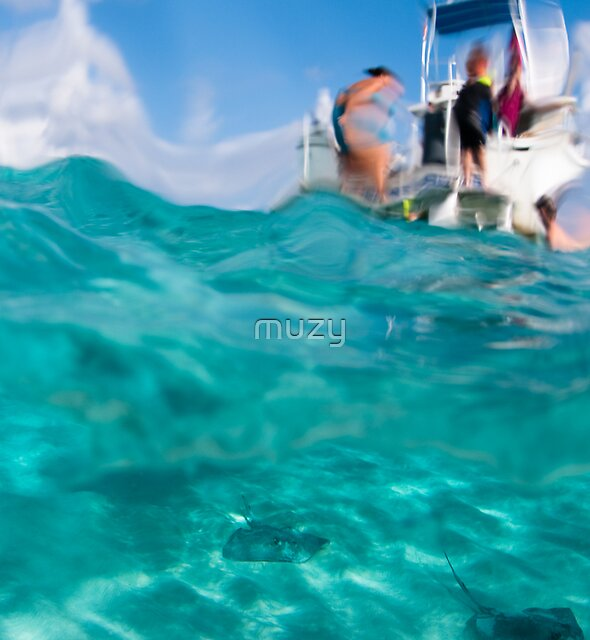 Stingrays under the boat by muzy
