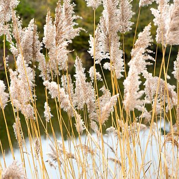 Canal side grass by Femaleform