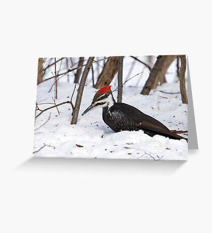 Snow Pecker Greeting Card