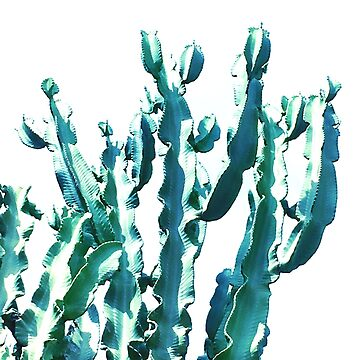 Fabulous Cactus Frills  by Dominiquevari