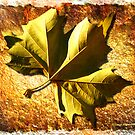 When Autumn Leaves Start to Fall by David's Photoshop