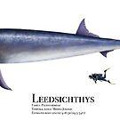 Leedsicthys by Liam Elward