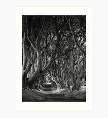 Dark Hedges, Co. Antrim, N. Ireland Art Print