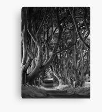 Dark Hedges, Co. Antrim, N. Ireland Canvas Print