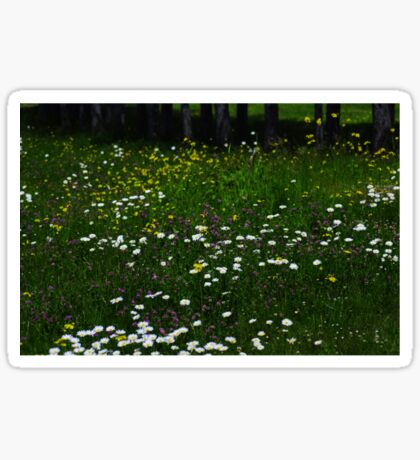 ...and daisies Sticker