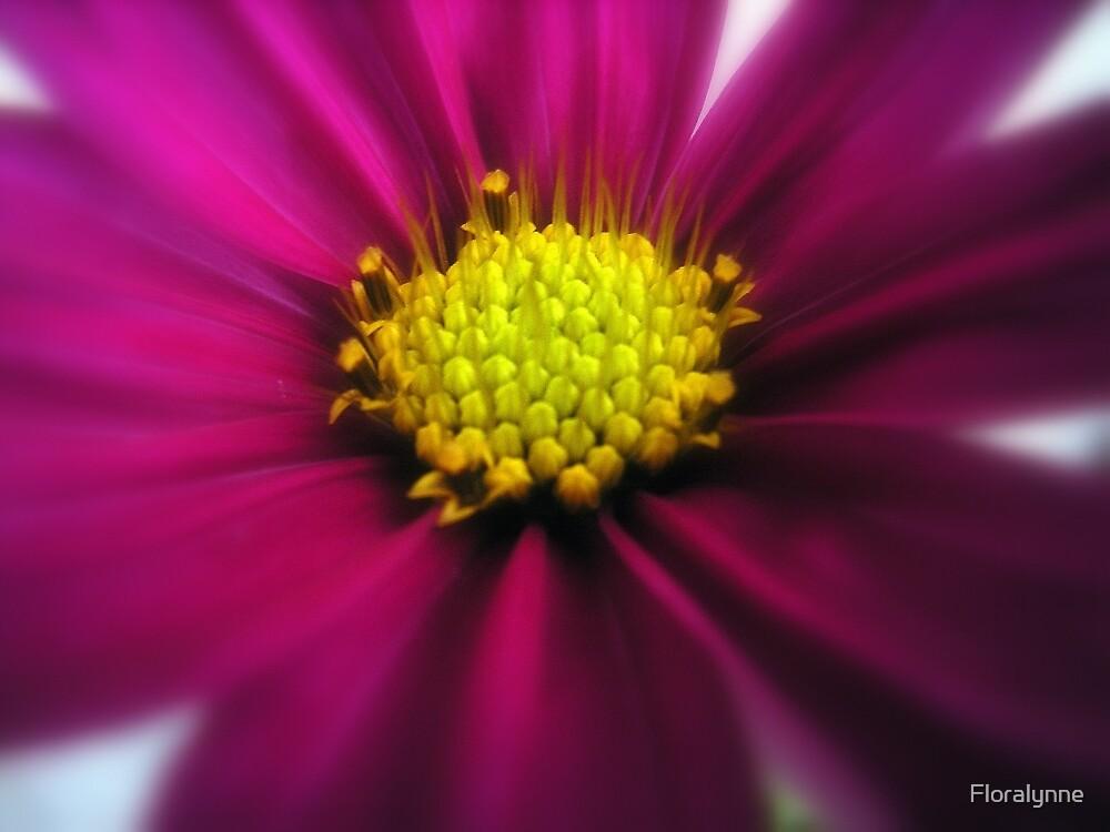 cosmos by Floralynne