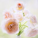 Soft Pink Rose Blooms by Tracy Riddell