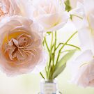 Rose Blooms in Soft Pink by Tracy Riddell