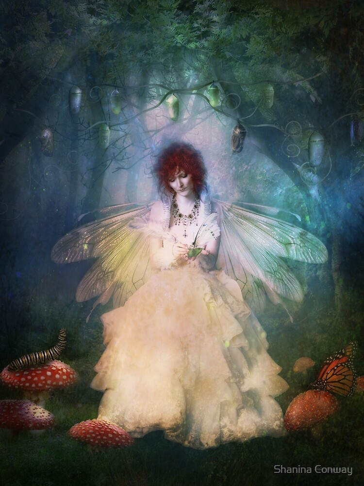The Butterfly Painter by Shanina Conway