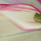 Leaf green tree frog by Jenny Dean